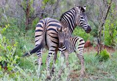3 Day Father and Son Safari