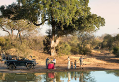 8-Day South African Safari & Highlights
