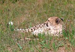 Cape Winelands & Cheetah Outreach (Private)