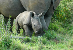 Eastern Cape Game Reserve Safari