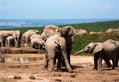 Addo Elephant National Park Eastern Cape