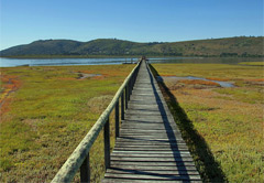 6 Day Luxury Safari Garden Route Tour(UMZLGR6)