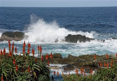 Garden Route Self Drive Tours