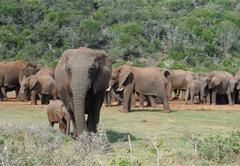 3 Day Karoo Fossil Safari (UMZKF3)