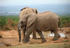 Addo Elephant National Park & Schotia Big 5 Priva