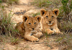 4 day Kruger National Park Acco/Camping (UMZN24)