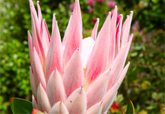 Protea Farm and Woodcutters journey