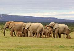 Addo Elephant Park&Amakhala Private Reserve
