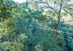 Canopy Treetop Tour and Storms River Mouth