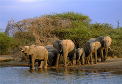 Addo River Safari & Addo National Elephant Park