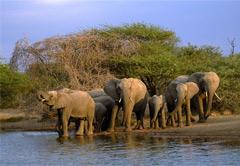 Addo River Safari & Addo National Elephant Park