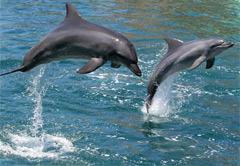 Port Elizabeth Heritage & Marine Life Tour