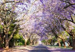 Soweto, Johannesburg & Pretoria
