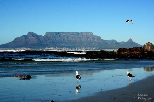 Table Mountain Photographs
