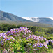 Salmonsdam Nature Reserve, Cape Town