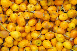 Venda Cuisine: Marula Fruit