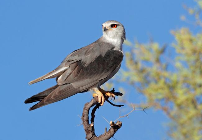 Birding With The Graaff Reinet Bird Club