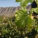 SoetKaroo Wine Estate, Cape Town