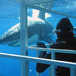 Shark Cage Diving, Garden Route