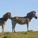 Koeberg Nature Reserve, Cape Town