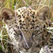 Tenikwa Wildlife Awareness Centre, Garden Route