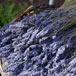 The Lavender Farm, Cape Town
