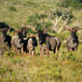 Groendal Wilderness Area hikes, Eastern Cape