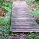 Garden of Eden Forest Walk, Garden Route