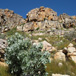 Cederberg 100 Trail, Cape Town