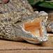 Le Bonheur Crocodile Farm, Cape Town