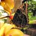 Butterflies for Africa, Durban