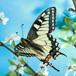 Visit Jabulani Butterfly Garden, Johannesburg