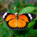 Visit the Butterfly Garden at Ludwig's Roses, Johannesburg