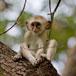 Monkey around at Monkeyland, Garden Route