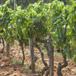 Visit Boplaas Family Vineyards, Cape Town