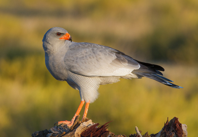 Things To Do In CamperdownAfrican Bird Of Prey Sanctuary