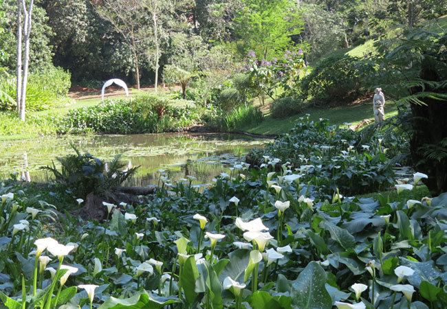 Makaranga Botanical Garden