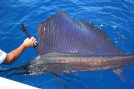 Deep sea fishing charter for Deep sea fishing st lucia