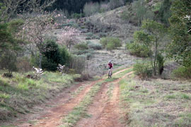 The Beautiful Magoebaskloof Trails