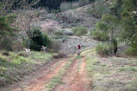 The Beautiful Magoebaskloof Trails