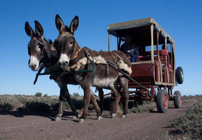 Donkey Cart Tours