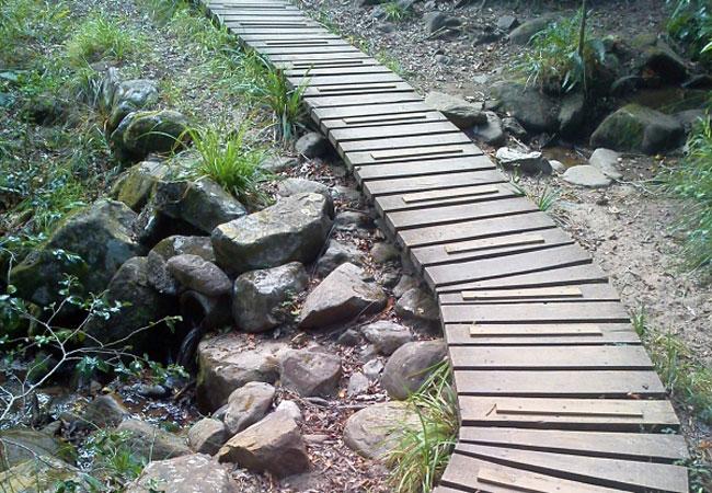 Kirstenbosch Botanical Gardens In Newlands Cape Town