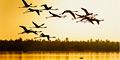 Birding in Natal Tour - 5 nights Code ESS5 by Bushcat Safaris