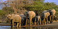 5 day Wildlife Discovery (Jhb - Dbn) by African Blue Tours