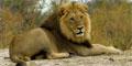 14 Day Lesotho, Swaziland & Kruger (UMZN36) by Umzantsi Afrika Tours