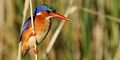 Birdwatching in Cape Town & Environs. by Crane's Cape Tours & Travel