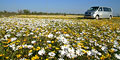 Spring Flower Tour by Crane's Cape Tours & Travel
