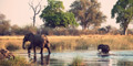 5 - Day Comprehensive Garden Route & Safari (Private Tour) by Southern African Tours