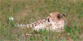 Cape Winelands & Cheetah Outreach (Private) by Southern African Tours