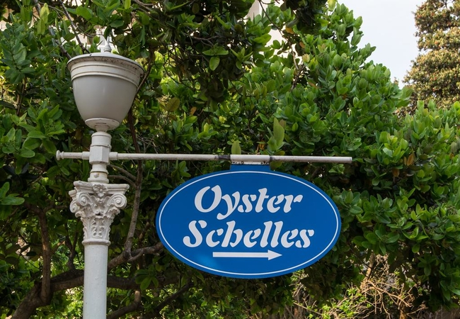 302 Oyster Schelles